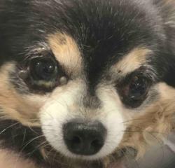 動物別症例集 犬 動物病院うみとそら 杉並区永福町 浜田山 方南町